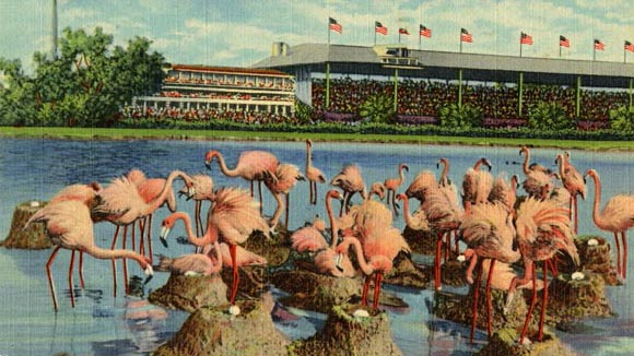 flamingos-at-hialeah-park