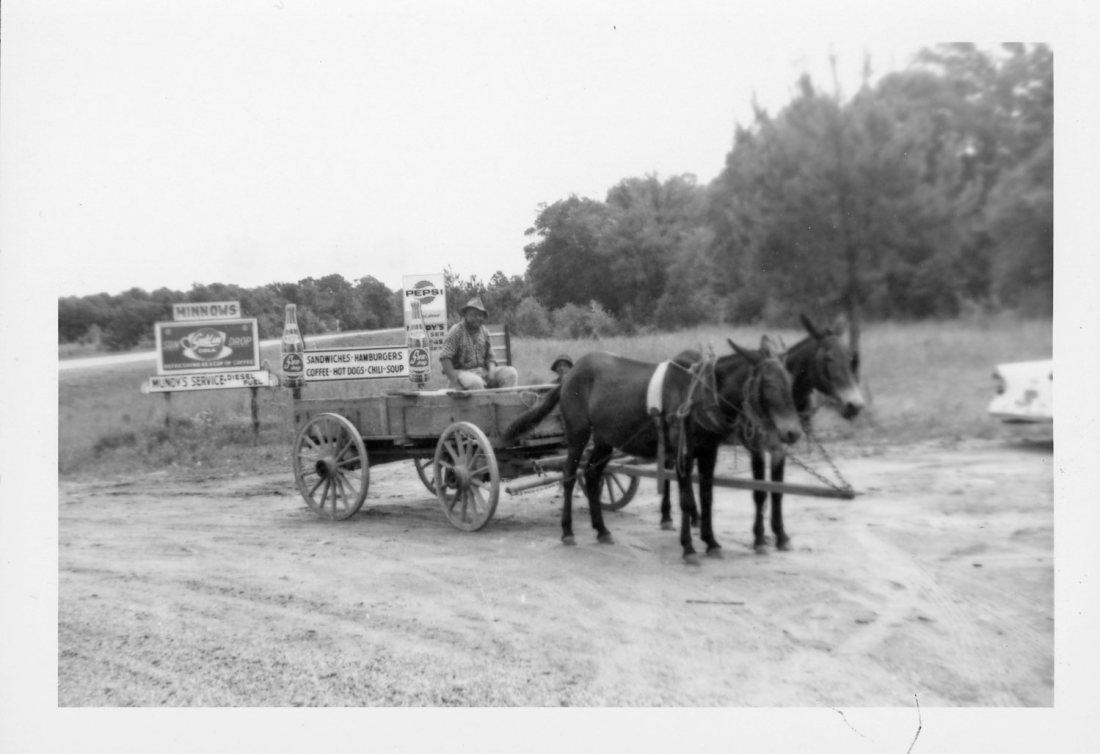 1965 05 Alabama horse drawn cart